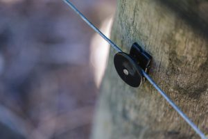 Using Cordall Wire Clip in the vineyard (1)